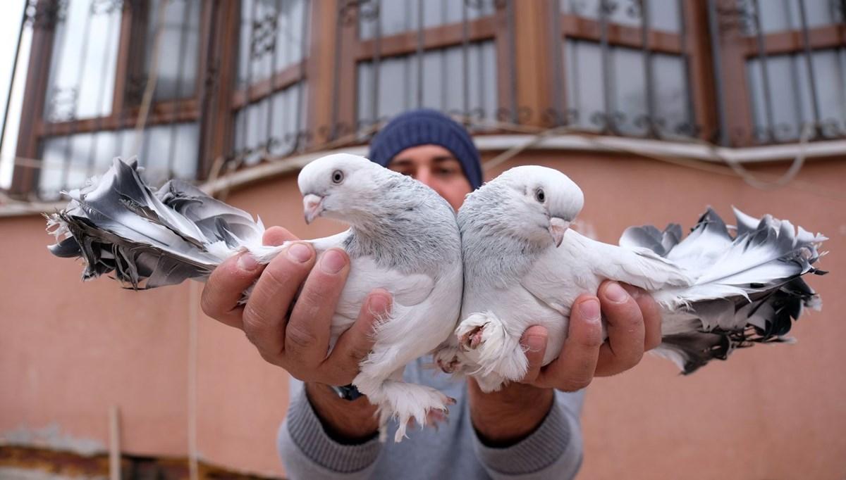 Otomobil fiyatına güvercin satıyor: Çifti 100 bin lira