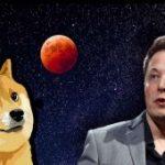 Elon Musk'ın Yeni Dogecoin (DOGE) Paylaşımı Yine Ses Getirdi!
