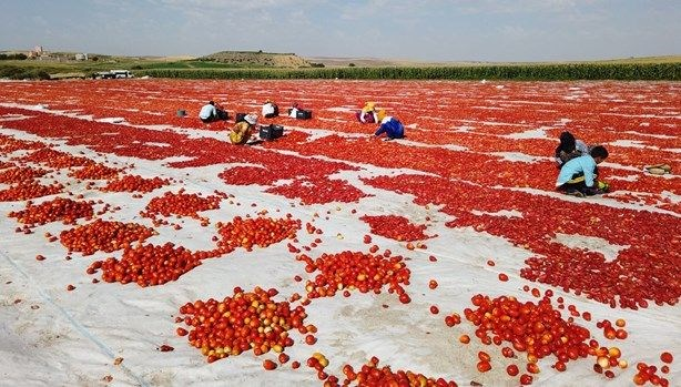 İtalya'ya Diyarbakır'dan domates