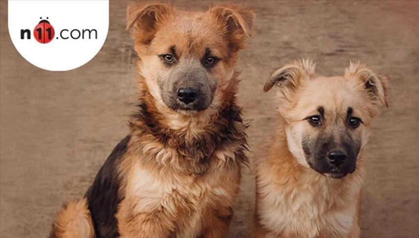 n11.com'dan 4 Ekim Hayvanları Koruma Günü'ne özel kampanya
